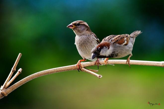 Loài vật chung thủy hiếm hoi của tự nhiên thường chọn vợ kén chồng như thế nào? - Ảnh 3.