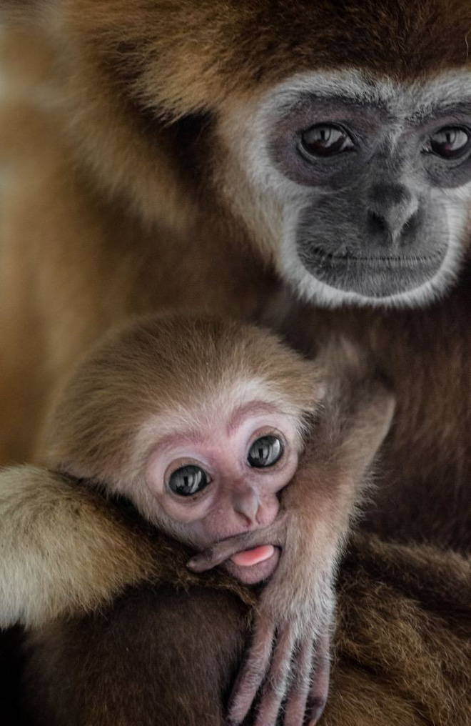 Khoảnh khắc thân mật của các loài động vật khiến chúng ta ghen tỵ - Ảnh 4.