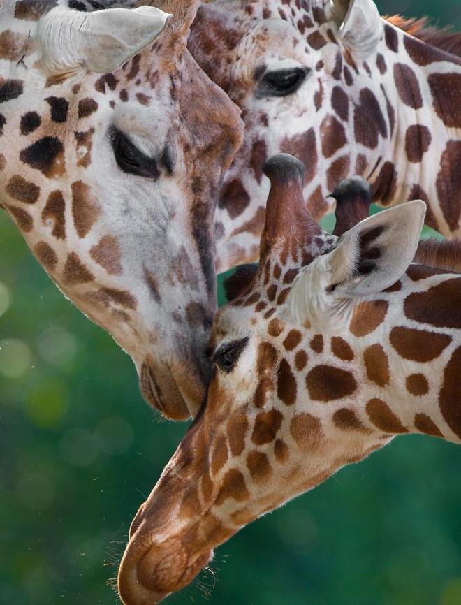 Khoảnh khắc thân mật của các loài động vật khiến chúng ta ghen tỵ - Ảnh 5.