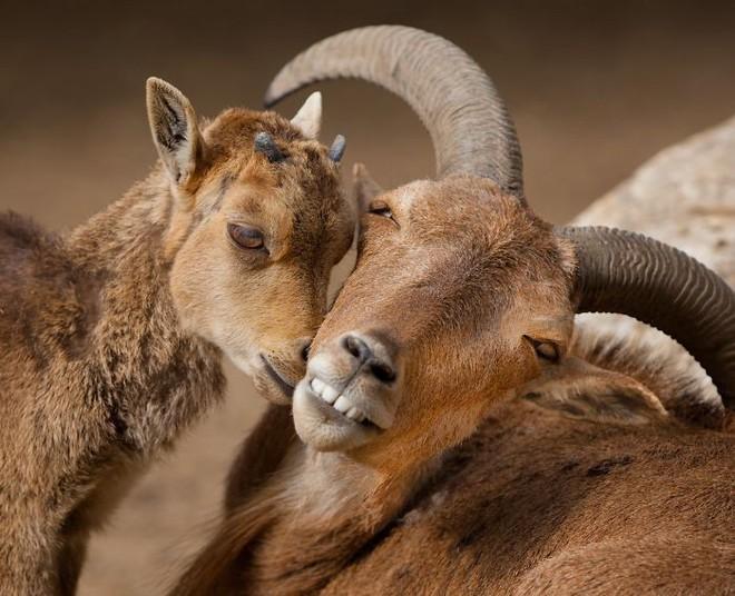 Khoảnh khắc thân mật của các loài động vật khiến chúng ta ghen tỵ - Ảnh 6.
