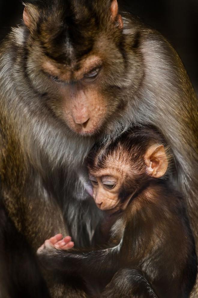 Khoảnh khắc thân mật của các loài động vật khiến chúng ta ghen tỵ - Ảnh 7.