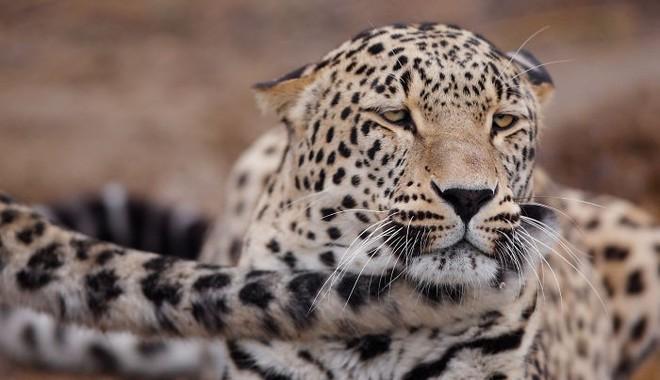 Khoảnh khắc thân mật của các loài động vật khiến chúng ta ghen tỵ - Ảnh 8.