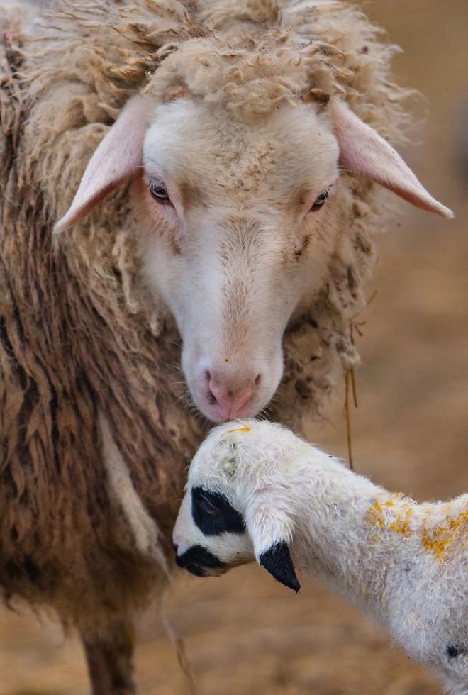 Khoảnh khắc thân mật của các loài động vật khiến chúng ta ghen tỵ - Ảnh 9.