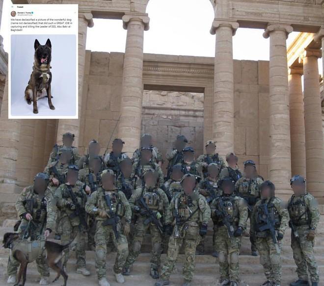 Hai trùm khủng bố đều bị chó lấy đầu: Mỹ huấn luyện sát thủ máu lạnh như thế nào? - ảnh 3