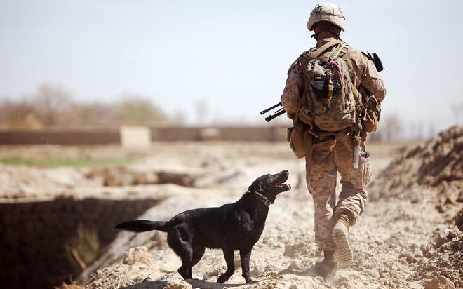 Hai trùm khủng bố đều bị chó lấy đầu: Mỹ huấn luyện sát thủ máu lạnh như thế nào? - ảnh 5