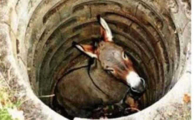 Con lừa kêu la thảm thiết bỗng nhiên im bặt, ngó xuống giếng xem, người nông dân kinh ngạc trước cảnh tượng nhìn thấy