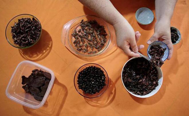 Gia đình nuôi bọ cánh cứng, kiến, gián… để ăn suốt 3 năm nay: Chúng có vị như khoai tây chiên - Ảnh 1.