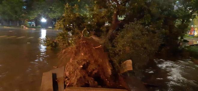 Bão đổ bộ trong đêm, cây ngã đổ la liệt, nhiều địa phương ở Phú Yên, Bình Định mất điện - Ảnh 8.