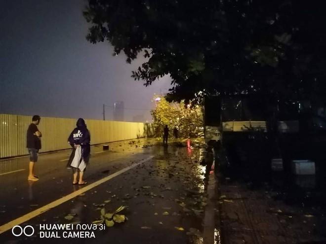 Bão đổ bộ trong đêm, cây ngã đổ la liệt, nhiều địa phương ở Phú Yên, Bình Định mất điện - Ảnh 10.