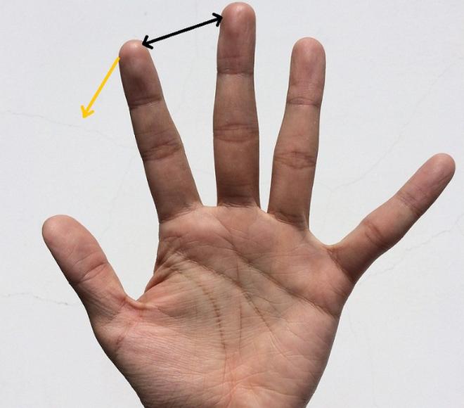 Khoảng cách giữa các ngón tay sẽ tiết lộ bạn sống độc lập hay phụ thuộc - Ảnh 5.