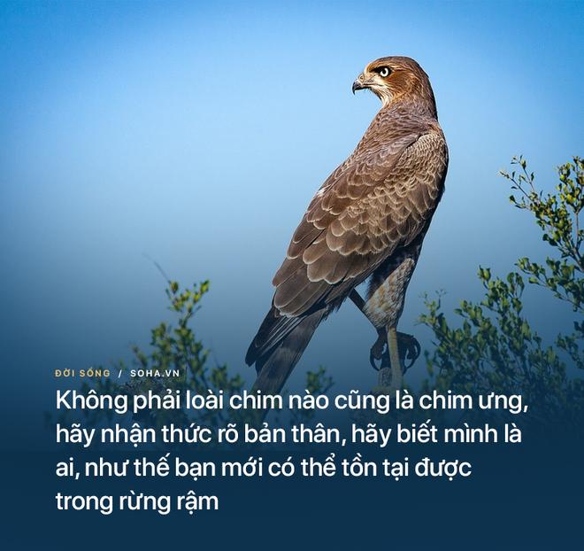 10 đạo lý thâm thúy rút ra từ chuyện của các loài động vật: Ai cũng nên đọc - Ảnh 3.