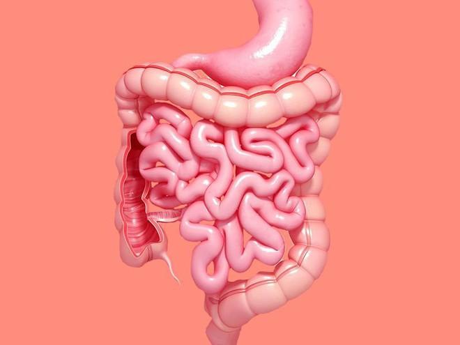 Đông y Trị liệu: Hướng dẫn cách xoa bụng dưỡng sinh và hỗ trợ chữa bệnh ở hệ tiêu hóa - ảnh 1
