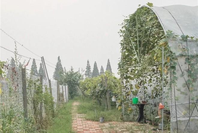 Mạnh mẽ đưa ra quyết định bỏ phố về quê, cô gái 9x đã đem lại những ngày thảnh thơi cho cha mẹ bên khu vườn rộng 6000m² - Ảnh 35.