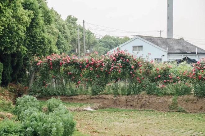 Mạnh mẽ đưa ra quyết định bỏ phố về quê, cô gái 9x đã đem lại những ngày thảnh thơi cho cha mẹ bên khu vườn rộng 6000m² - Ảnh 4.