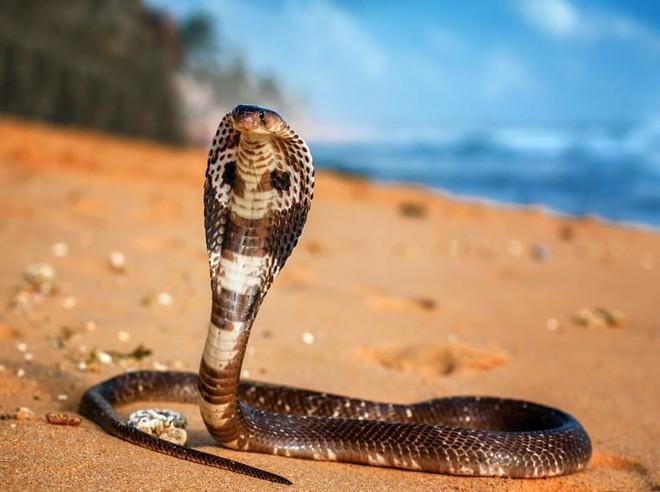Những thất bại muối mặt của rắn độc khi đụng độ thiên địch, cái giá phải trả là mạng sống - Ảnh 1.