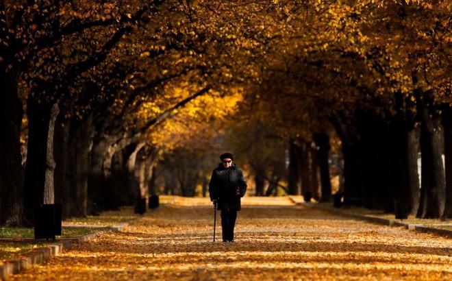 24h qua ảnh: Người phụ nữ đi trên thảm lá mùa thu ở thủ đô Nga