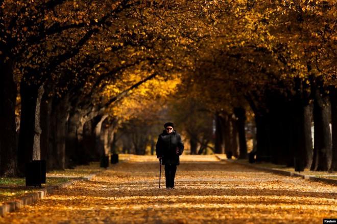 24h qua ảnh: Người phụ nữ đi trên thảm lá mùa thu ở thủ đô Nga - ảnh 6