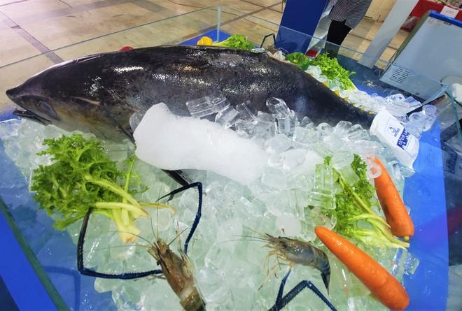 Cá ngừ đại dương nặng 30kg, thủy quái dài cả mét gây sốt tại chợ hải sản Hà Nội  - Ảnh 3.