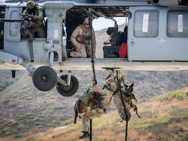 Bí mật về đội chó đa nhiệm 'không bao giờ sủa' của đặc công Delta, Mỹ - Ảnh 1.