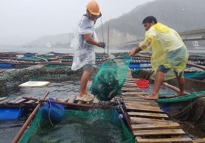 Người dân chạy đua với bão Nakri, vớt tôm cá trước giờ bão đổ bộ - Ảnh 3.