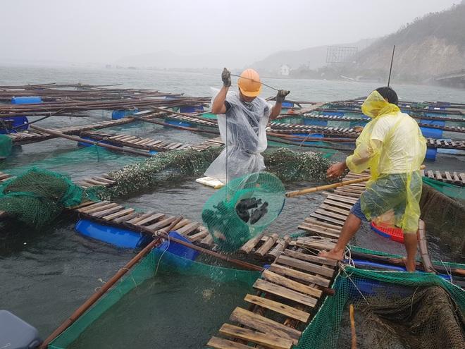 Người dân chạy đua với bão Nakri, vớt tôm cá trước giờ bão đổ bộ - Ảnh 2.