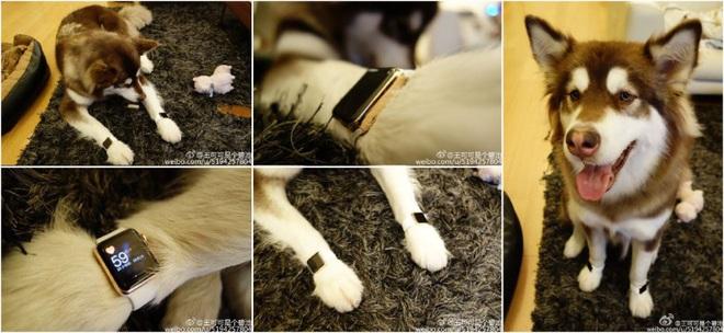 Từng mua cả Apple Watch cho chó đeo, thiếu gia Trung Quốc bị chính quyền cho vào danh sách đen vì nợ hàng chục triệu USD - Ảnh 1.