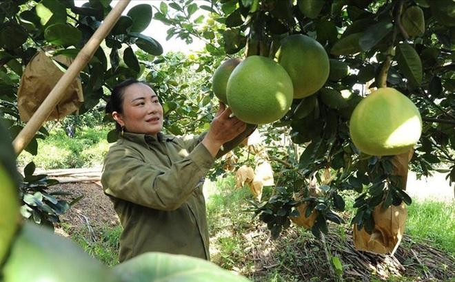 Nghệ An: Hàng trăm người dân viết đơn xin thoát nghèo