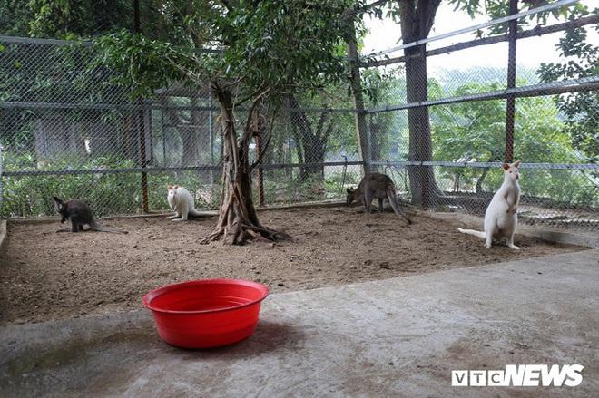 Ảnh: Ngắm đàn Kangaroo mini lần đầu tiên xuất hiện tại Việt Nam - Ảnh 6.