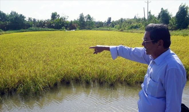 Hành trình 20 năm đưa gạo Việt vượt Thái Lan thành gạo ngon nhất thế giới - Ảnh 2.