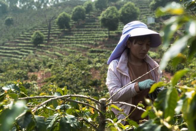 Đằng sau hiệu triệu xóa nghèo khí thế của ông Tập Cận Bình: Nông thôn tái nghèo, nông dân thèm được như Triều Tiên - Ảnh 2.