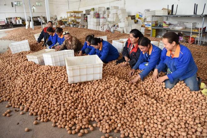 Đằng sau hiệu triệu xóa nghèo khí thế của ông Tập Cận Bình: Nông thôn tái nghèo, nông dân thèm được như Triều Tiên - Ảnh 3.