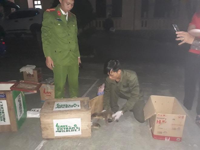 19 cá thể rái cá quý hiếm thuộc sách đỏ Việt Nam bị đóng thùng buôn lậu - ảnh 3