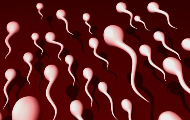 Dấu hiệu nhận biết phái mạnh có tinh trùng khoẻ mạnh - Ảnh 1.