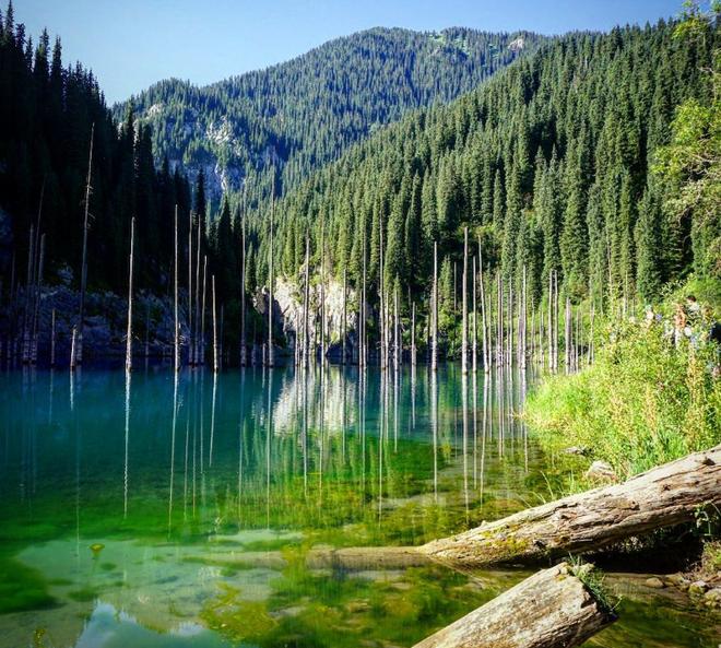 """Giải mã bí ẩn: Hồ nước kỳ ảo """"siêu thực"""" hô biến cây mọc ngược dưới đáy - Ảnh 4."""