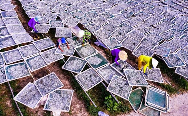 24h qua ảnh: Ngư dân phơi cá làm mắm đặc sản ở Phú Quốc
