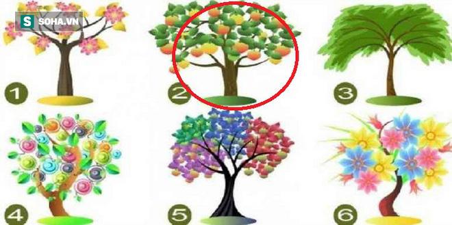 Cái cây bạn chọn sẽ đại diện cho tiềm năng lớn nhất của bản thân - Ảnh 2.