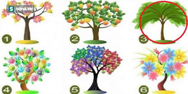 Cái cây bạn chọn sẽ đại diện cho tiềm năng lớn nhất của bản thân - Ảnh 3.