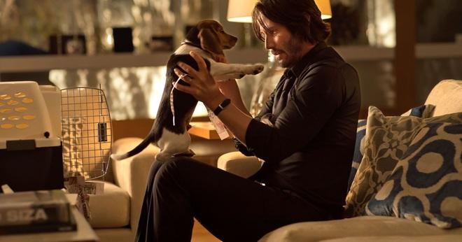 Sát thủ John Wick: Yêu chó điên cuồng trên phim còn sự thật ngoài đời ra sao? - Ảnh 2.