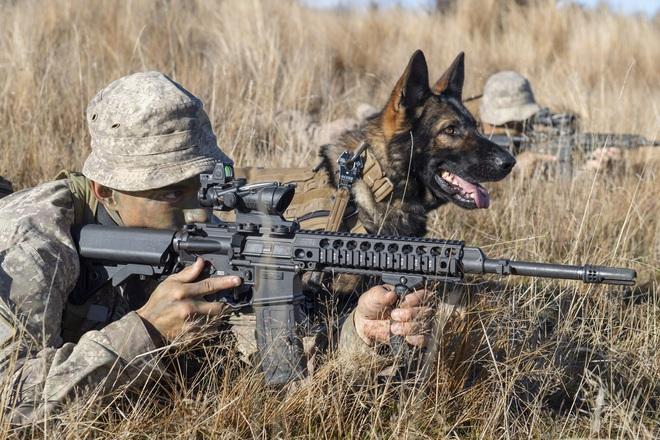 Những chú chó nghiệp vụ đã bị Quân đội Mỹ vắt chanh bỏ vỏ như thế nào? - ảnh 2