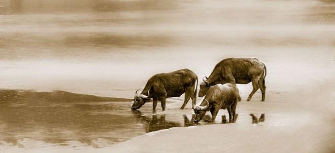 Sau Rằm tháng 10 âm, 6 con giáp có thể đổi vận, tài lộc dồi dào, sức khỏe thịnh vượng - Ảnh 2.