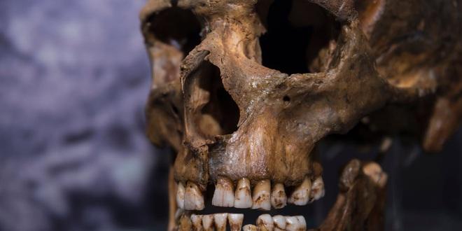 Sóng thần tuyệt chủng: Những con số khổng lồ chứng minh Trái Đất đang trong cơn bạo bệnh - Ảnh 2.
