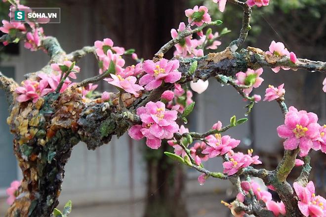Mãn nhãn cây đào dáng huyền độc nhất Việt Nam, nặng 2 tấn ghép từ hàng nghìn viên đá quý  - Ảnh 13.