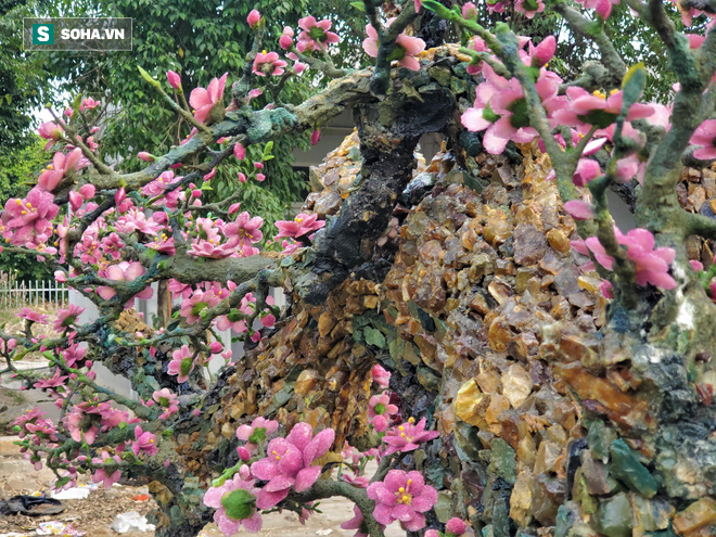 Mãn nhãn cây đào dáng huyền độc nhất Việt Nam, nặng 2 tấn ghép từ hàng nghìn viên đá quý  - Ảnh 7.