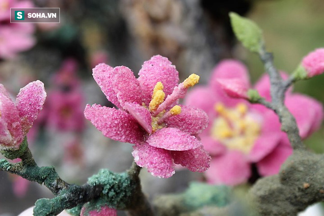 Mãn nhãn cây đào dáng huyền độc nhất Việt Nam, nặng 2 tấn ghép từ hàng nghìn viên đá quý  - Ảnh 6.