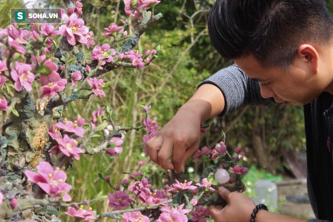 Mãn nhãn cây đào dáng huyền độc nhất Việt Nam, nặng 2 tấn ghép từ hàng nghìn viên đá quý  - Ảnh 3.
