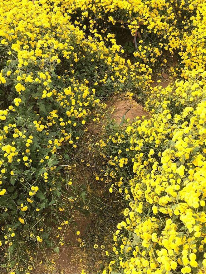 Nằm hẳn lên luống hoa cúc chụp ảnh, cô gái khiến người dân phẫn nộ, viết bài tố cáo - Ảnh 4.