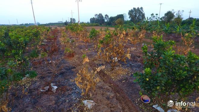 Hưng Yên: Người dân Khoái Châu khóc ròng khi vườn cây ăn quả bị kẻ gian đốt trộm - Ảnh 5.