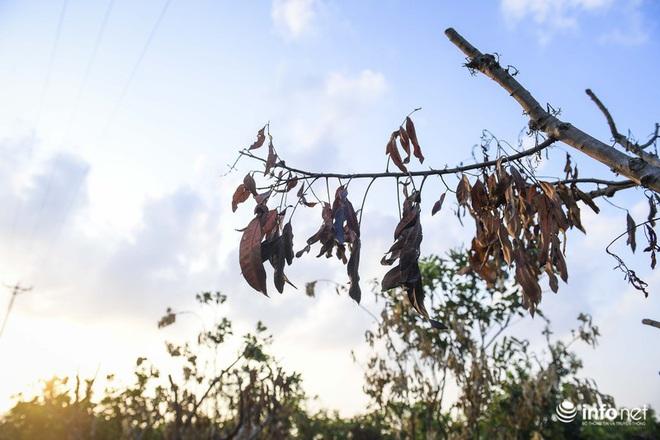 Hưng Yên: Người dân Khoái Châu khóc ròng khi vườn cây ăn quả bị kẻ gian đốt trộm - Ảnh 6.