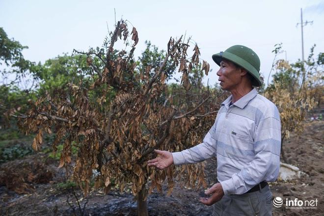 Hưng Yên: Người dân Khoái Châu khóc ròng khi vườn cây ăn quả bị kẻ gian đốt trộm - Ảnh 7.