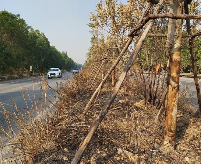 Cây xanh Quốc lộ 18 bất ngờ bị đốt cháy, đơn vị quản lý nói gì? - Ảnh 1.